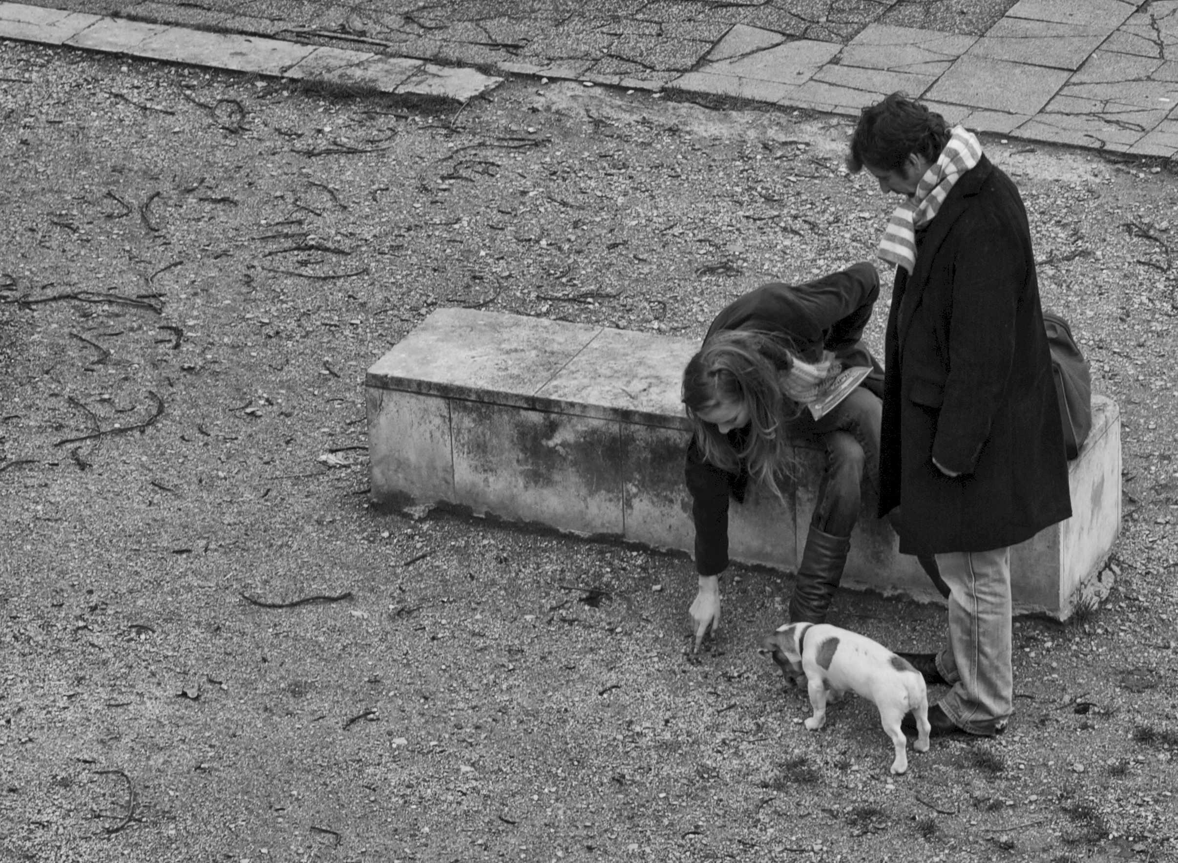Parigi -  il cane piccolo